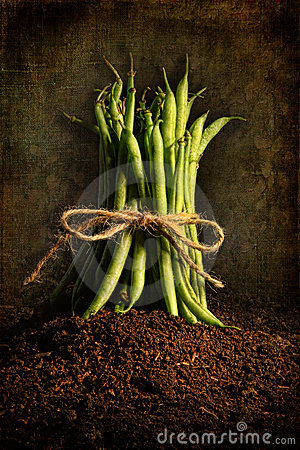 Fresh green beans tied against grunge background