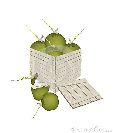 Fresh Green Coconuts in Wooden Cargo Box