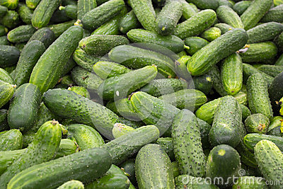 Fresh green cucumber collection outdoor on market Stock Photo