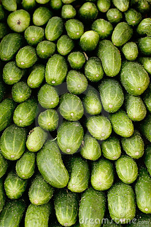 Fresh green cucumbers