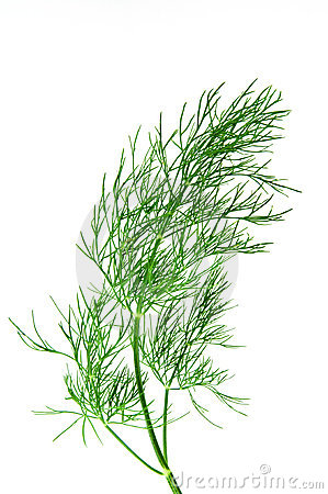 Free Fresh Green Dill Stock Images - 15435354