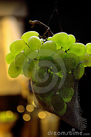 Fresh green grapes fruit