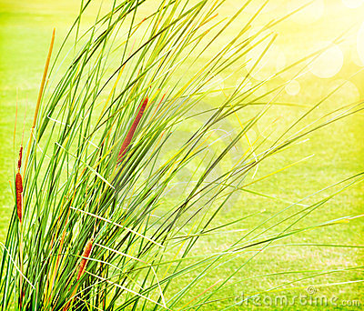 Fresh green grass abstract background