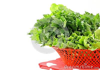 Fresh green grass parsley dill onion herbs mix