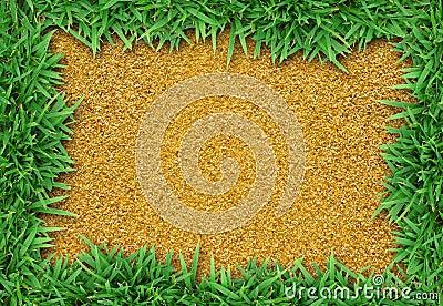 Fresh green grass on sand