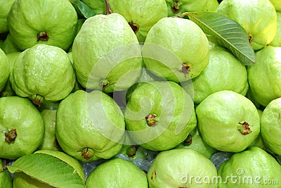 Fresh and green Guava fruit