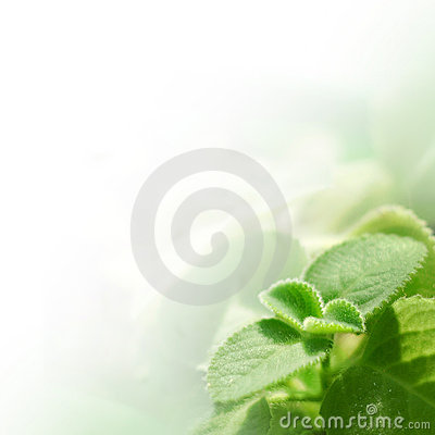 Free Fresh Green Leaves Royalty Free Stock Images - 13831929