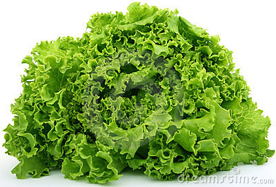Fresh green lettuce food