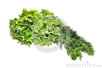 Fresh green lettuce frillice salad and dill