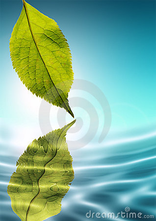 Free Fresh Green Nature Royalty Free Stock Photo - 2362035