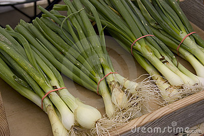 Fresh Green Onion Bunches