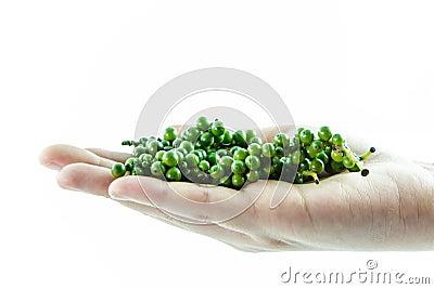 Fresh green pepper on hand isolate