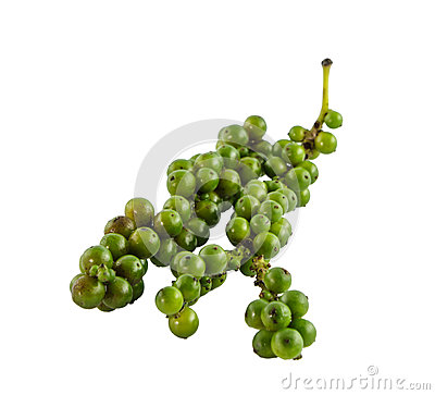 Fresh green pepper on white background
