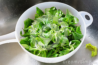 Fresh green salad in bowl