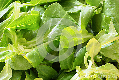 Fresh green salad leaves