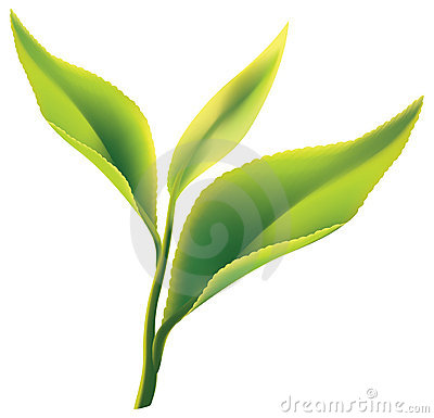 Free Fresh Green Tea Leaf On White Background Royalty Free Stock Images - 18269739