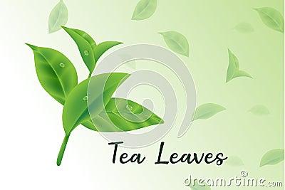 Fresh green tea leaves vector realistic 3d, tea leaves pattern Vector Illustration