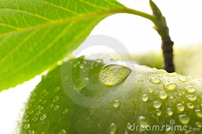 Fresh green wet apple with leaf