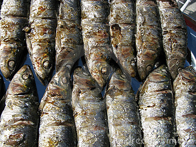 Fresh grilled  sardines