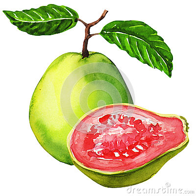 how to make guava juice from fresh guavas
