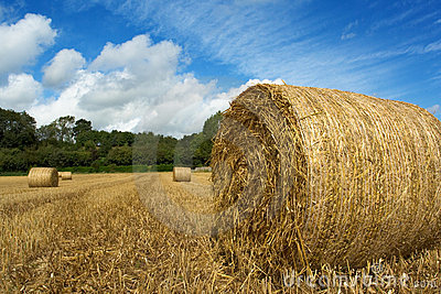 Fresh hay bales