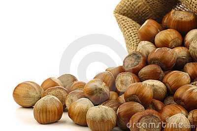 Fresh hazelnuts in a burlap bag