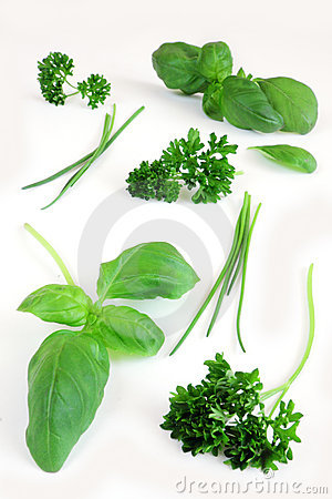 Free Fresh Herbs Stock Photo - 16251610