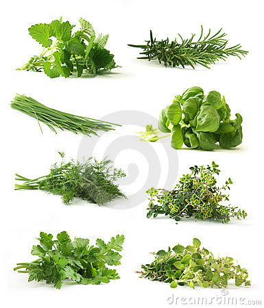 Free Fresh Herbs Stock Photo - 9098880