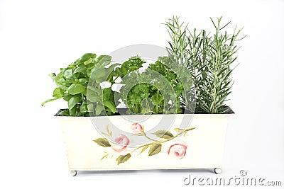 Fresh herbs (basil, parsley,rosemary)