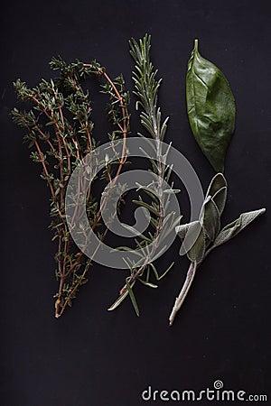 Fresh herbs on black background