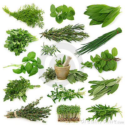 Free Fresh Herbs Collection Royalty Free Stock Photo - 14069515
