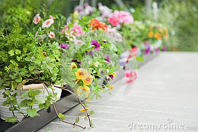Fresh herbs and flowers
