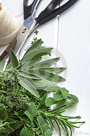 Fresh Herbs with Scissors and String