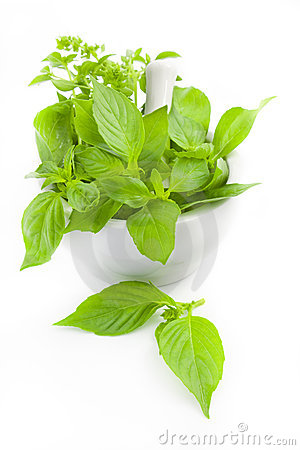 Free Fresh Herbs Whith Mortar And Pestle Royalty Free Stock Photos - 20106328