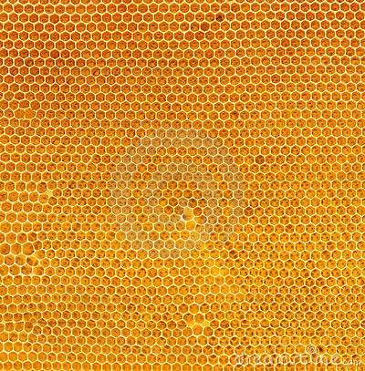 Free Fresh Honey In Comb Natural Texture Royalty Free Stock Photography - 15379547