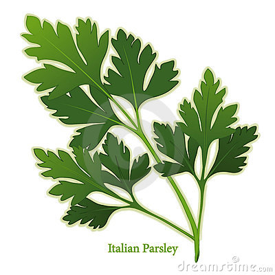 Fresh Italian Parsley Herb