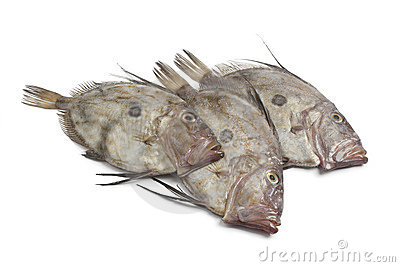 Fresh John Dory fishes