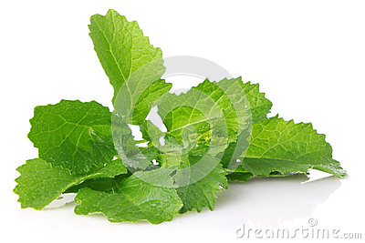 Fresh juicy leaves of salad mustard