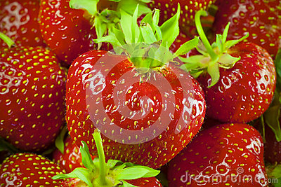 Fresh and Juicy Strawberrys