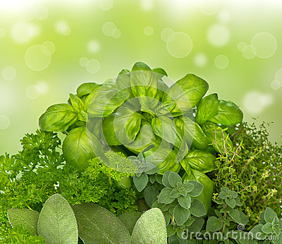 Fresh kitchen herbs on blured green background
