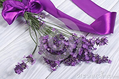 Fresh lavender flowers with purple ribbon