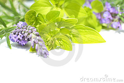 Fresh Lavender And Marjoram, Close Up Stock Images - Image: 22740564