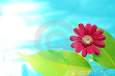 Fresh leaf and flower in purity water