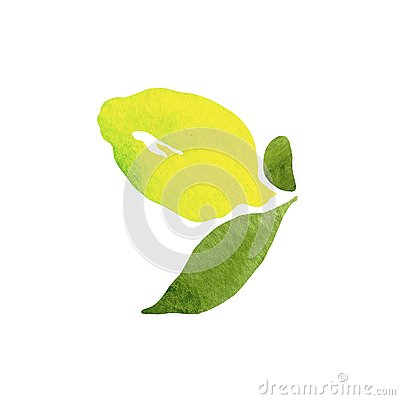 Fresh lemon fruit with green leaves on white background in beautiful style . Illustration. Design element.Citrus collection. Stock Photo