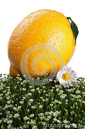 Fresh lemon on a green grass