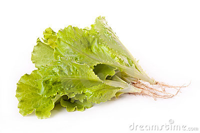 Fresh lettuce across white