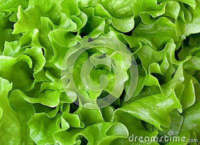 Fresh lettuce close-up
