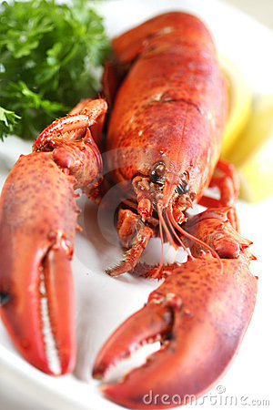 Free Fresh Lobster Stock Photos - 956873