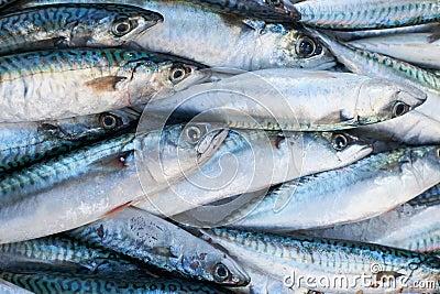 Fresh mackerel fish for sale on market