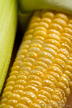 Fresh maize corns